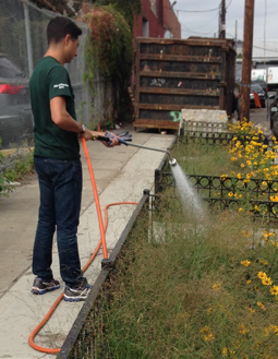 Bioswales-and-Volunteers